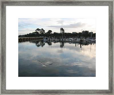 Framed Print featuring the photograph Soar by Dianne Levy