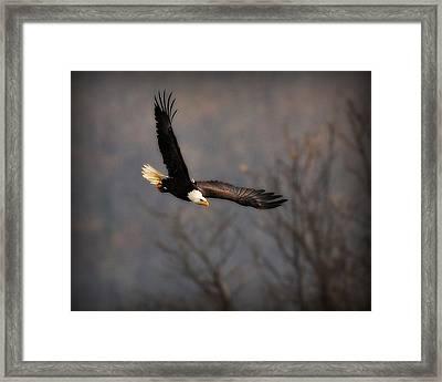 Soar Like An Eagle Framed Print by Angel Cher