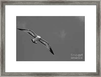 Soar Framed Print by Lynda Dawson-Youngclaus