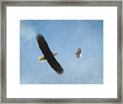 Soar On The Wings Of Eagles Framed Print by Angie Vogel