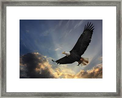 Soar To New Heights Framed Print by Lori Deiter