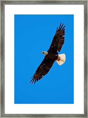 Framed Print featuring the photograph Soaring by Aaron Whittemore