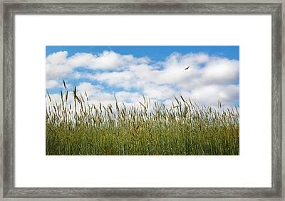 Soaring Framed Print by Bill Wakeley