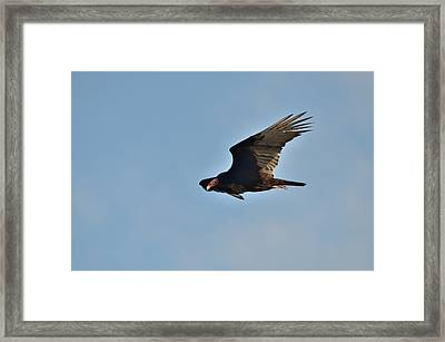 Framed Print featuring the photograph Soaring by David Porteus