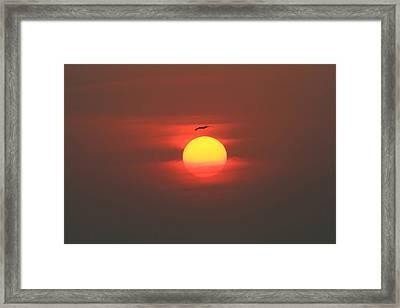 Soaring High Framed Print
