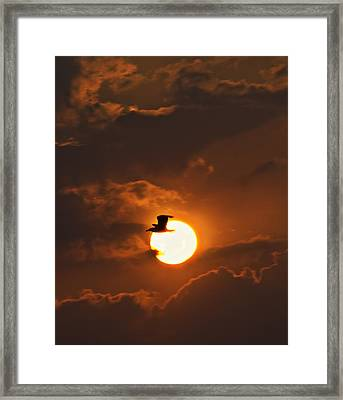 Soaring In The Sun Framed Print by Tony Reddington