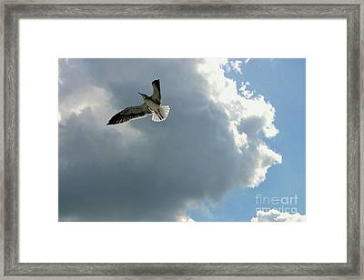 Framed Print featuring the photograph Soaring by Jeanne Forsythe