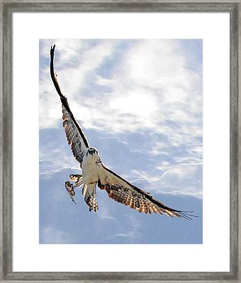 Soaring Framed Print by Julie Cameron