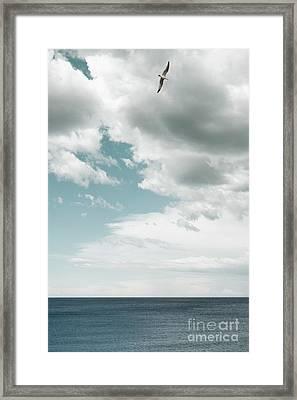 Soaring Framed Print by Margie Hurwich
