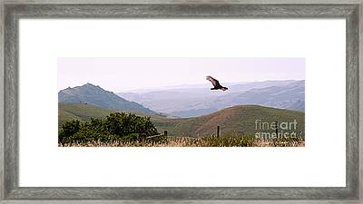 Soaring Over California - Condor In Morro Bay Coastal Hills Framed Print by Artist and Photographer Laura Wrede