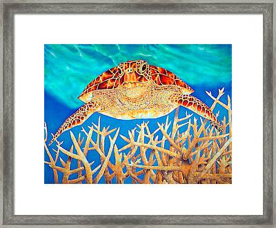 Sea  Turtle Soaring Over Staghorn Framed Print by Daniel Jean-Baptiste