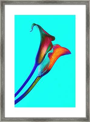 Soaring Passion Framed Print