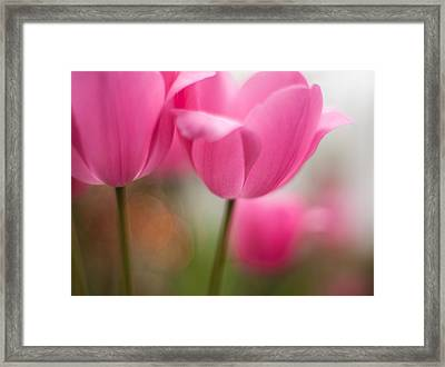 Soaring Pink Tulips Framed Print
