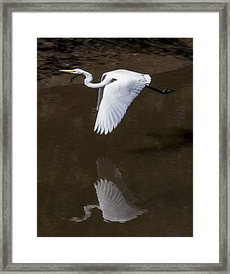 Soaring Reflection Framed Print by Paula Porterfield-Izzo