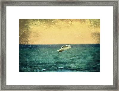 Soaring Seagull Framed Print