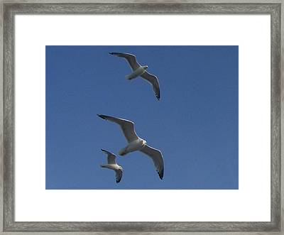 Soaring Seagulls Framed Print by Noreen HaCohen