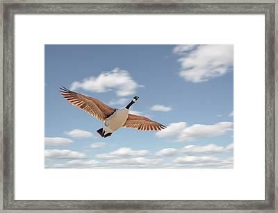 Soaring Framed Print by Steven Michael