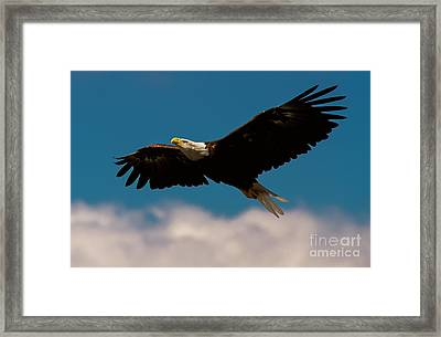 Soaring To Greater Heights Framed Print by Heidi Piccerelli