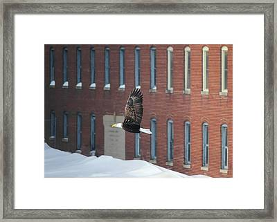 Framed Print featuring the photograph Soaring To Greatness by Viviana  Nadowski