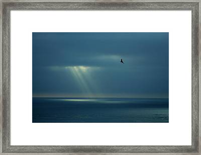 Soaring With Rays Of Hope Framed Print