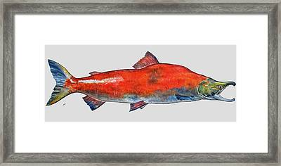 Sockeye Salmon Framed Print by Juan  Bosco