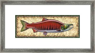 Sockeye Salmon Spawning Panel Framed Print by JQ Licensing