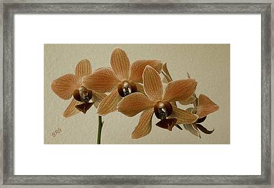Sofia Orchid Framed Print by Ben and Raisa Gertsberg