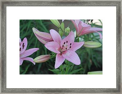 Soft And Beautiful Framed Print by Victoria Sheldon