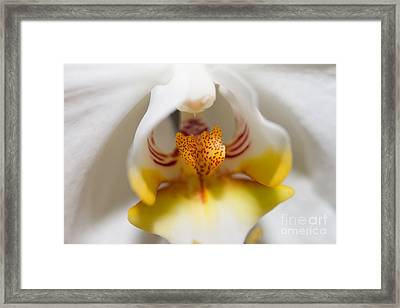 Soft And Glowing Framed Print