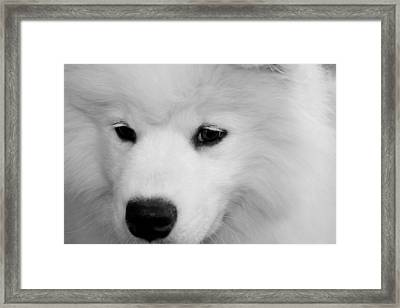 Soft And Overwhelming Beauty.... Framed Print by Fiona Kennard