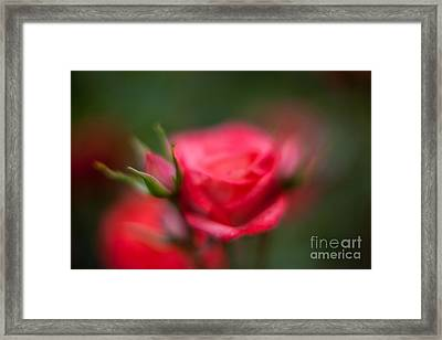 Soft And Peaceful Framed Print by Mike Reid