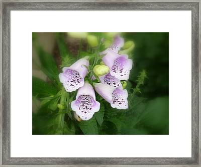 Soft And Silky Laced Gloves Framed Print by Lingfai Leung