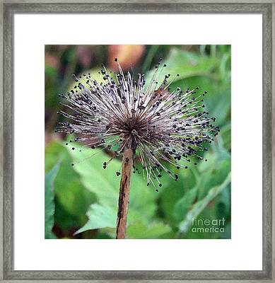 Framed Print featuring the photograph Soft And Spikey by Alison Caltrider