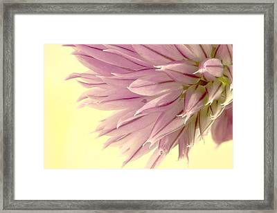 Soft And To The Point Framed Print