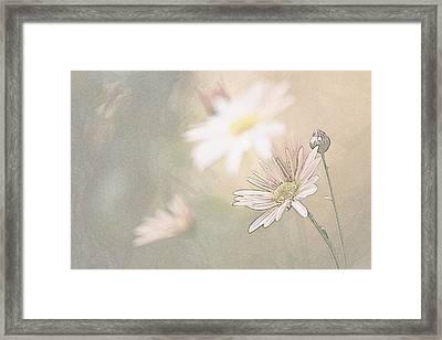 Soft Aster Framed Print by Tammy Schneider