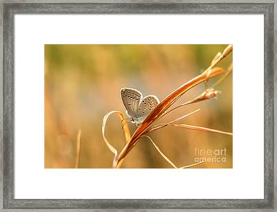 Soft Baby Blue Framed Print by Debbie Green