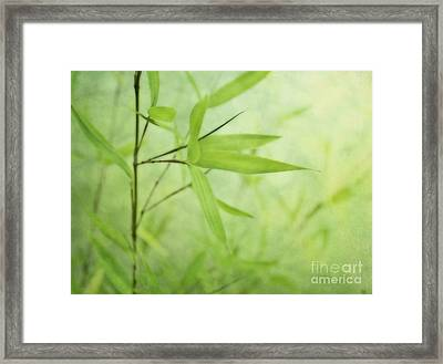 Soft Bamboo Framed Print
