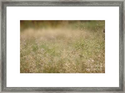 Soft Bent Grass Framed Print by Jolanta Meskauskiene