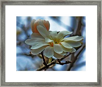 Framed Print featuring the photograph Soft Blooms by Rowana Ray