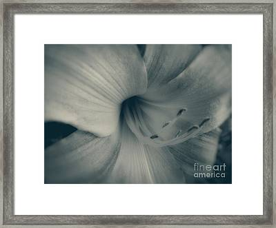 Soft Blossom Framed Print by Paul Cammarata