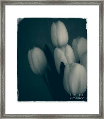 Soft Blue Tulips Framed Print