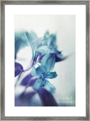 Soft Blues Framed Print