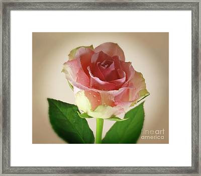 Soft Caress Raindrops On Roses Framed Print by Inspired Nature Photography Fine Art Photography
