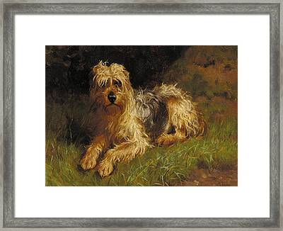 Soft Coated Wheaten Terrier  Framed Print by Alfred Duke