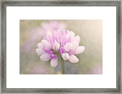 Soft Color Clover Framed Print by Faith Simbeck