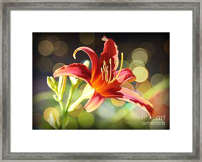 Soft Daylily Framed Print
