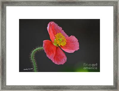 Soft Framed Print by Debby Pueschel
