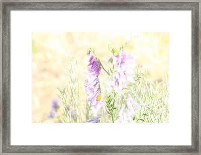 Soft Desert Flower Framed Print by Rich Collins