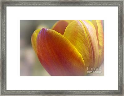 Framed Print featuring the photograph Soft Details  by John S