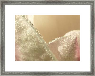Soft Dew Framed Print